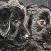 Two Matched Pups Poster