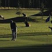 Two People Play Golf While Elk Graze Poster