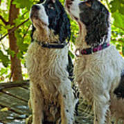 Two Wet Puppies Poster