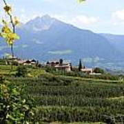 Tyrolean Alps And Vineyard Poster