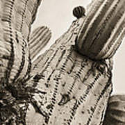 Under Saguaro Poster