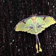 Unique Butterfly Resting On Tree Bark Poster