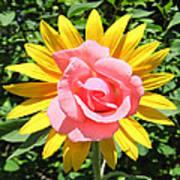 Unique Sun Rose Poster