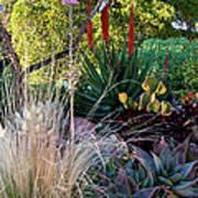 Urban Garden With Cactus Poster