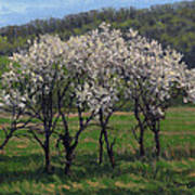 Valley Plum Thicket Poster
