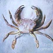 Velvet Crab  Study Poster