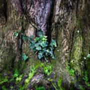 Velvet Ivy Poster
