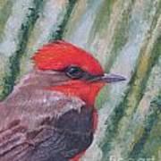 Vermillion Flycatcher Poster
