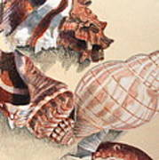 Vertical Conch Shells Poster