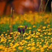 Vesuvius Wildflowers Poster