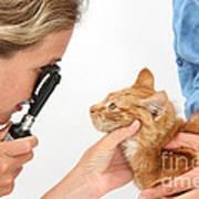 Vet Examining Kitten Poster