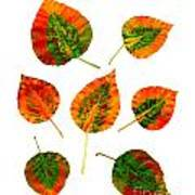 Vibrant Autumn Leaves Poster