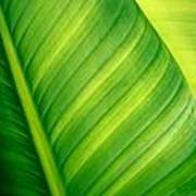 Vibrant Green Leaf Poster