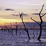 View Of Lake Kariba At Sunset Poster