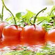 Vine Tomatoes And Salad With Water Poster