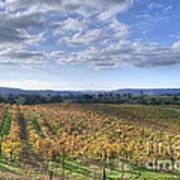 Vines In Fields Poster