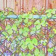 Vines On A Fence Poster