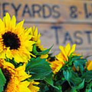 Vineyards And Winery Tastings Poster
