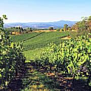 Vineyards In The Yarra Valley, Victoria, Australia Poster