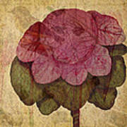 Vintage Cabbage Poster by Bonnie Bruno