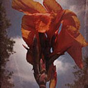 Vintage Canna Lily Poster by Richard Cummings