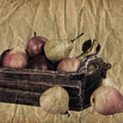 Vintage Pears Poster by Jane Rix