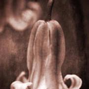 Vintage Pixie Hat Poster