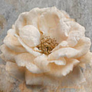 Vintage Rose I Square Poster