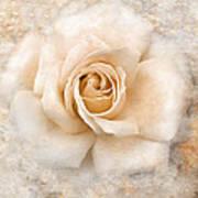 Vintage Rose V Square Poster