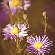 Vintage Violet  Poster