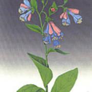 Viriginia Bluebells Poster