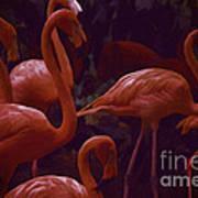 Walking Flamingos Poster