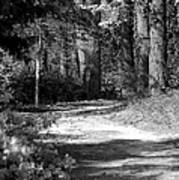Walking In The Springtime Woods In Black And White Poster