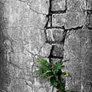 Wall Ferns Poster