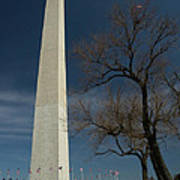 Washington Monument's World Famous Kite Eating Tree Poster