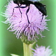 Wasp On Lavender Wildflower  Poster by Maureen  McDonald