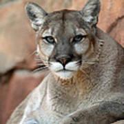 Watching Cougar Poster