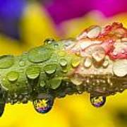Water Drops On A Budding Flower Poster