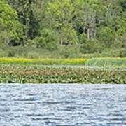 Water Landscape Poster