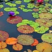 Water Lilies I Poster