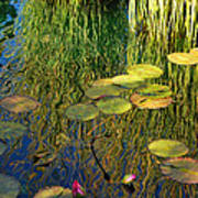 Water Lilies Reflection Poster