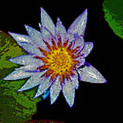 Water Lilly Paint Poster