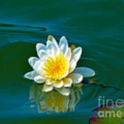 Water Lily 4 Poster by Julie Palencia