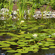 Water Lily Garden 2 Poster