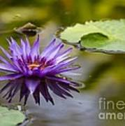 Water Lily Kissing The Water Poster