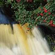 Waterfall And Fuschia, Ireland Poster
