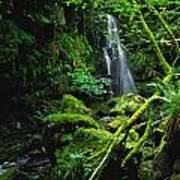Waterfall, Sloughan Glen, Co Tyrone Poster