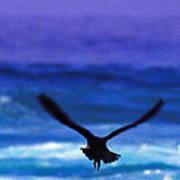 Wavewings Poster
