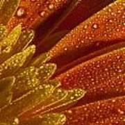 Wet Blumen Poster