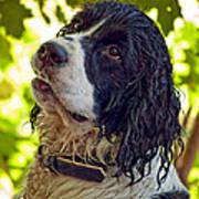 Wet Puppy Poster